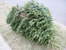 Photo of holiday tree at the curb
